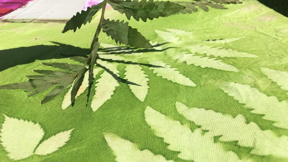 Peeling away the fern leaf to reveal the print
