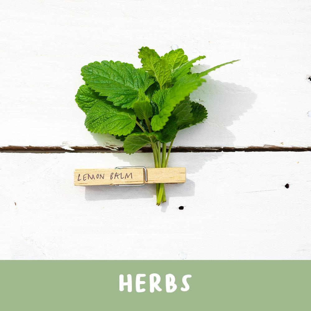 herbstitle.jpg