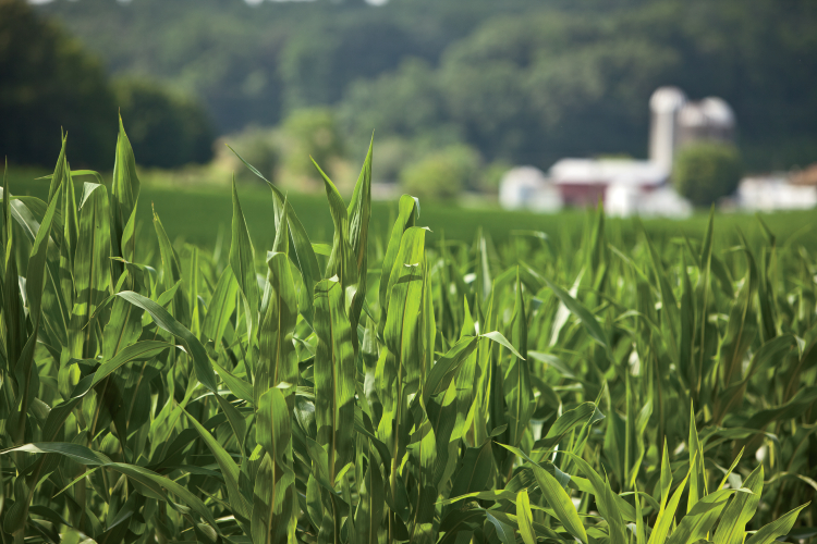 North Carolina's Crops Feed the World