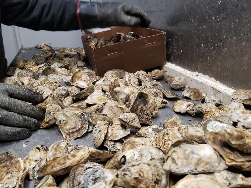 web_fridge_oyster_20181005_123411.jpg