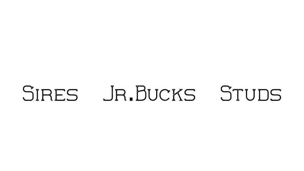 SJBS2.jpg