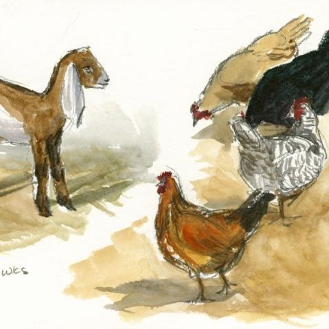 farm-sketches.jpg