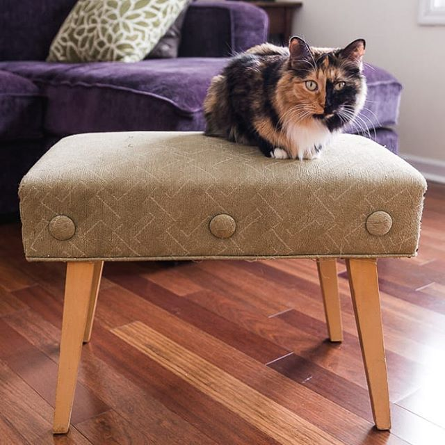 Want to see how I modernized this old stool? New blog coming tomorrow with a diy! Stella can't wait!