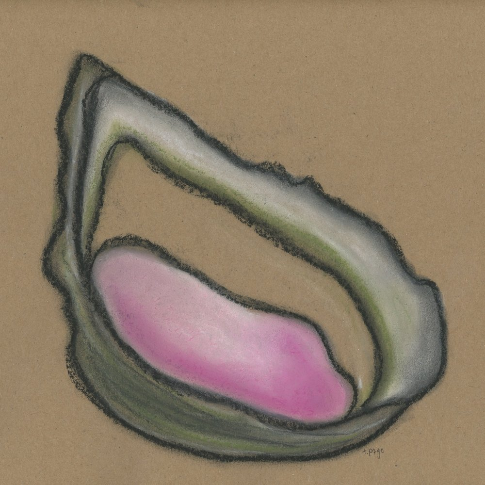 Oyster Shells Traci Page 2016 Watercolor & Pastel