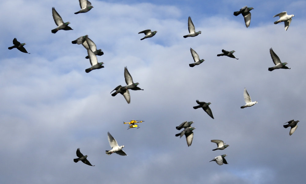 birds-and-drones.jpg