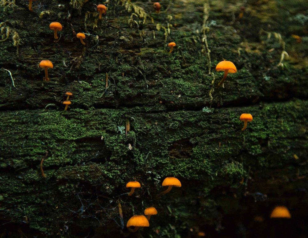 Wild Mushroom Adventures -