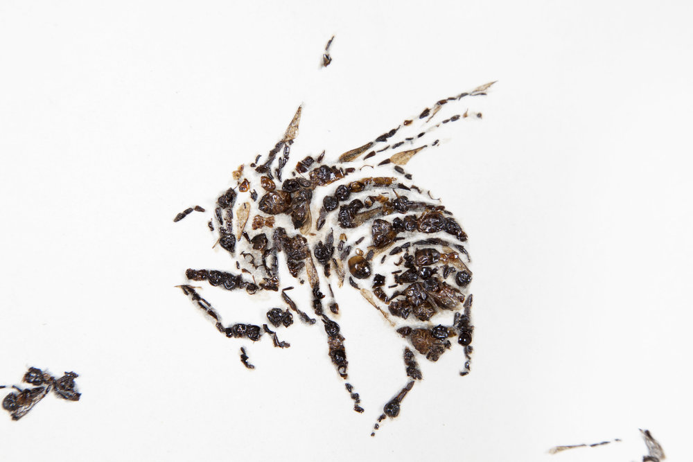 detail of Bees of Bees 5  2012  gum bichromate print with honeybees on paper  59 x 100 in