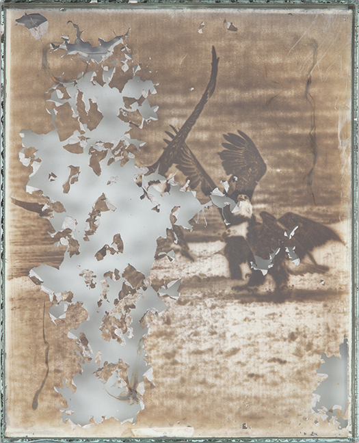 Eagle 20  2017-2019  Daguerreotypes made from American Silver Eagle coins and glass  10 x 8 x 1 in.