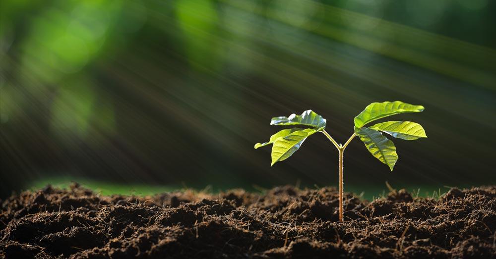 PlantingSeedBlogPost.jpg