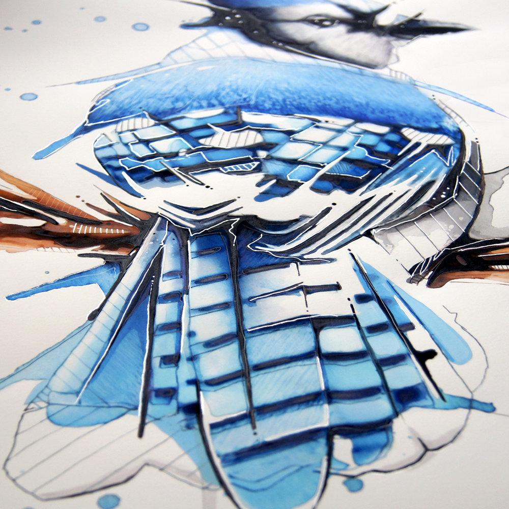 Bluejay_CloseUp6.jpg