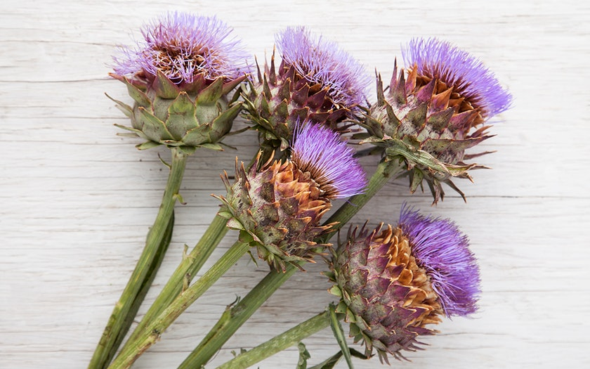Knoll Farms  Organic Cardoon Flowers  $9.99