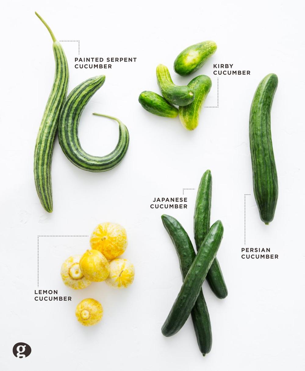cucumber-varieties-good-eggs.png