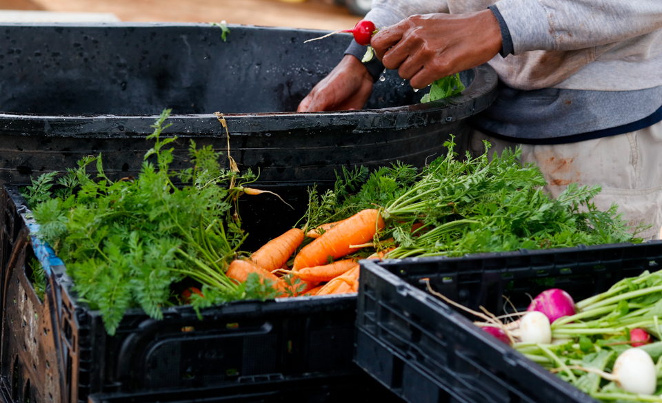 Hungry for Health - Making fresh food accessible across Athens, Georgia