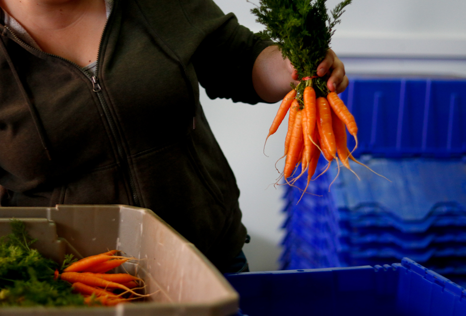 Rachel Vaughan, Collective Harvest CSA manager, sorts carrots in preparation for CSA pickup at Collective Harvest in Athens, Georgia, on Tuesday, April 17, 2018.