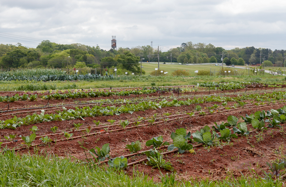 Crops are pictured at UGArden in Athens, Georgia, on Monday, April 16, 2018.