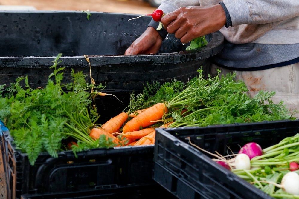 Hungry for Health - Making fresh food accessible across Athens-Clarke County