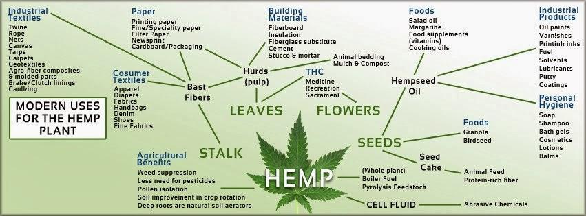 modern-uses-for-the-hemp-plant.jpg