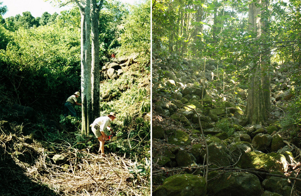 Fig 1 (a) Regenerators at work in Jephcotts stinger gulley 1992. (b) Recovering rainforest at the same site in 2006, 14 years later. (Photos: Mark Dunphy).