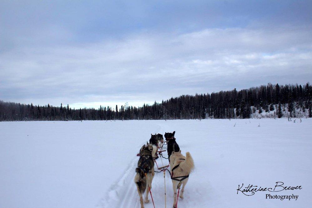 3. John West _Alaska Dogsledding.jpg