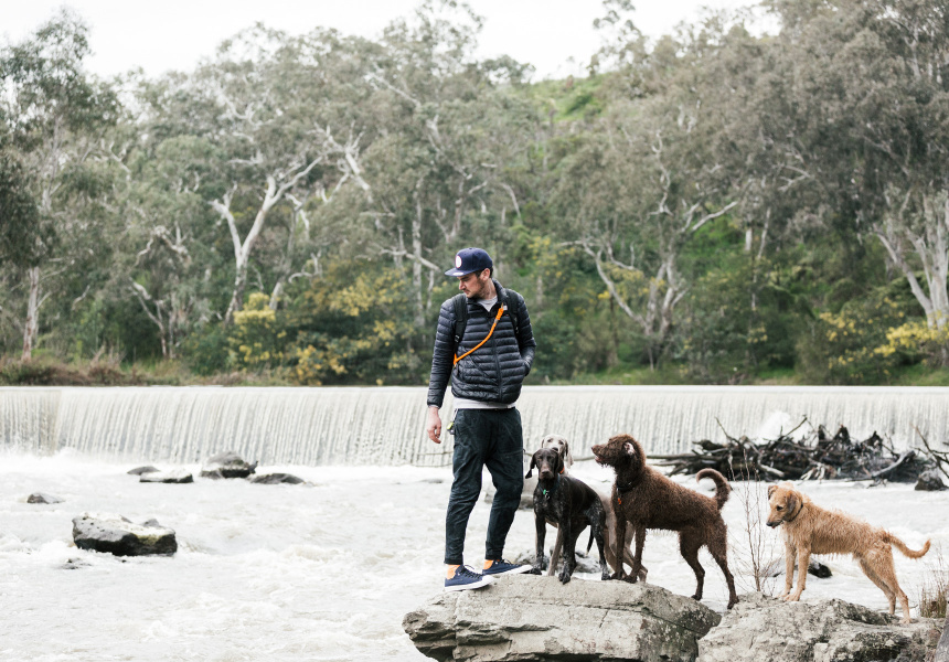 Melbourne Dog Walking Adventure - Broadsheet