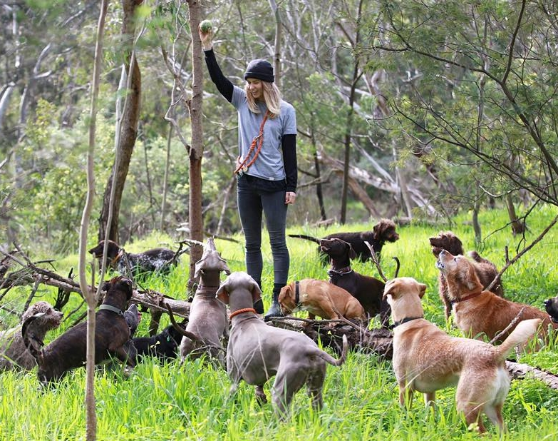 Our Adventures - Small controlled packs of dogs taken to the best adventure locations around Melbourne. There's no comparison to the Tom + Captain Team's experience and knowledge when it comes to taking dogs on adventures and this is why The Age, Broadsheet, Chanel 7 and 9, Monocle, Vice, The Living Room, The Weekly Review, The Herald Sun and many more reputable sources recommend us.