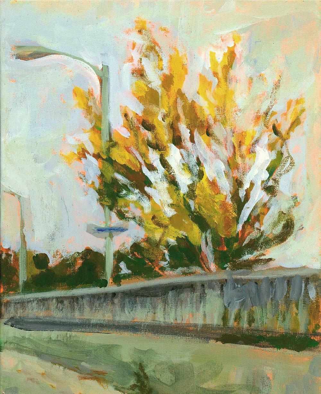 fall tree on bayview 1.jpg