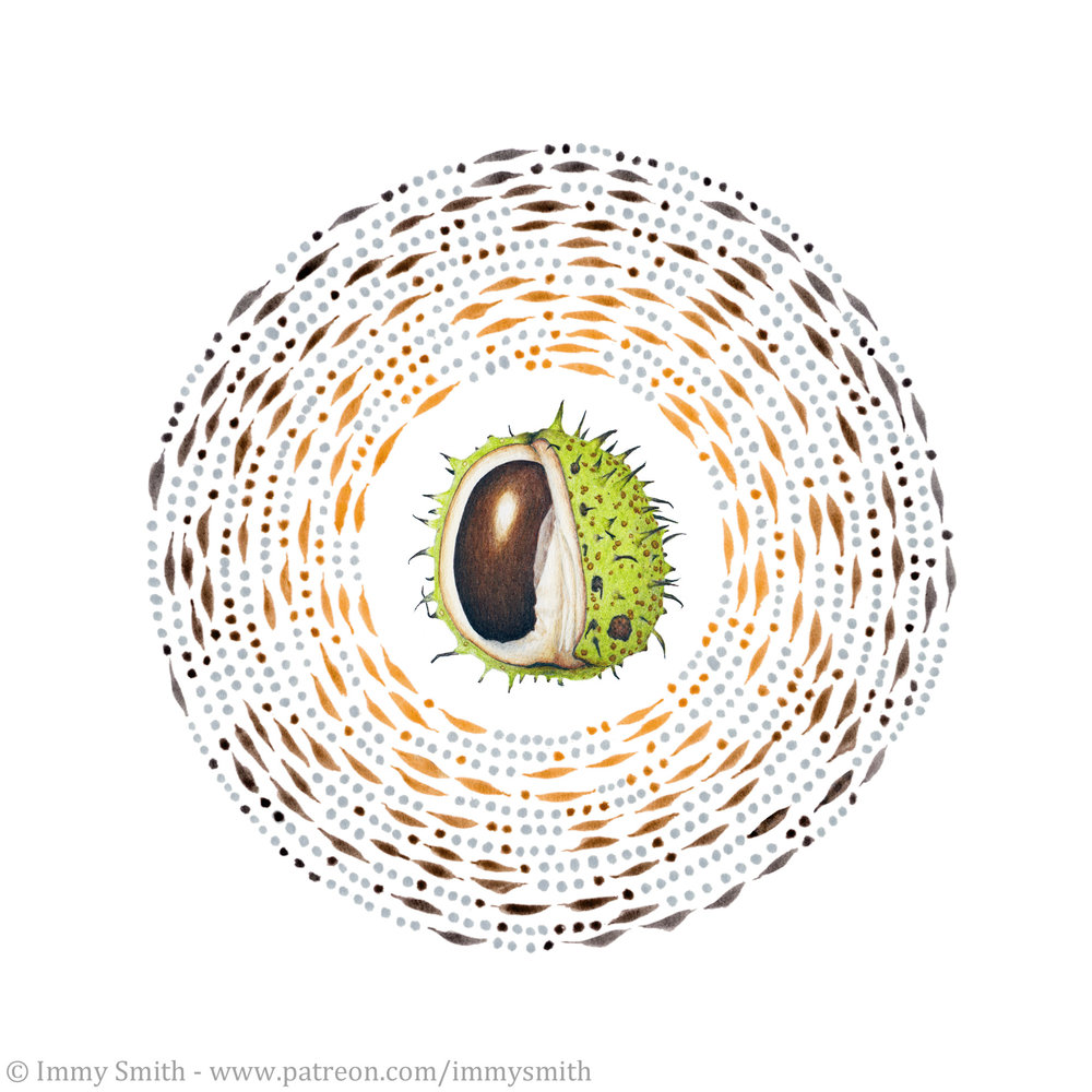 a brown and green colour pencil drawing of a conker (a horse chestnut seed) in its shell, surrounded by a clockwise spiral of made of grey dots and orange dots and dashes which gradually change through brown to dark grey.