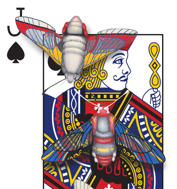 Image description; the corner of a Jack of Spades playing card design. The design has been hand-painted with moths that look like they have evolved a wing pattern that camouflages them on the card.