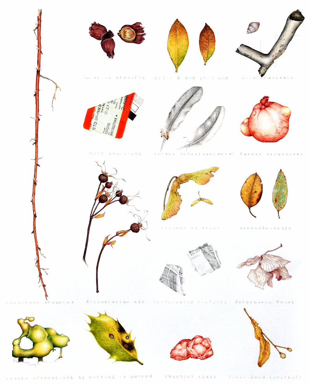 A colour pencil drawing of a range of debris objects, including dead leaves, old tickets, and pieces of flesh.