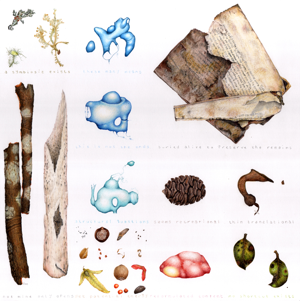 A colour pencil drawing of a range of debris items, including old bones, bark, crumbling book pages, and leaves. There are also three blue imaginary objects drawn.