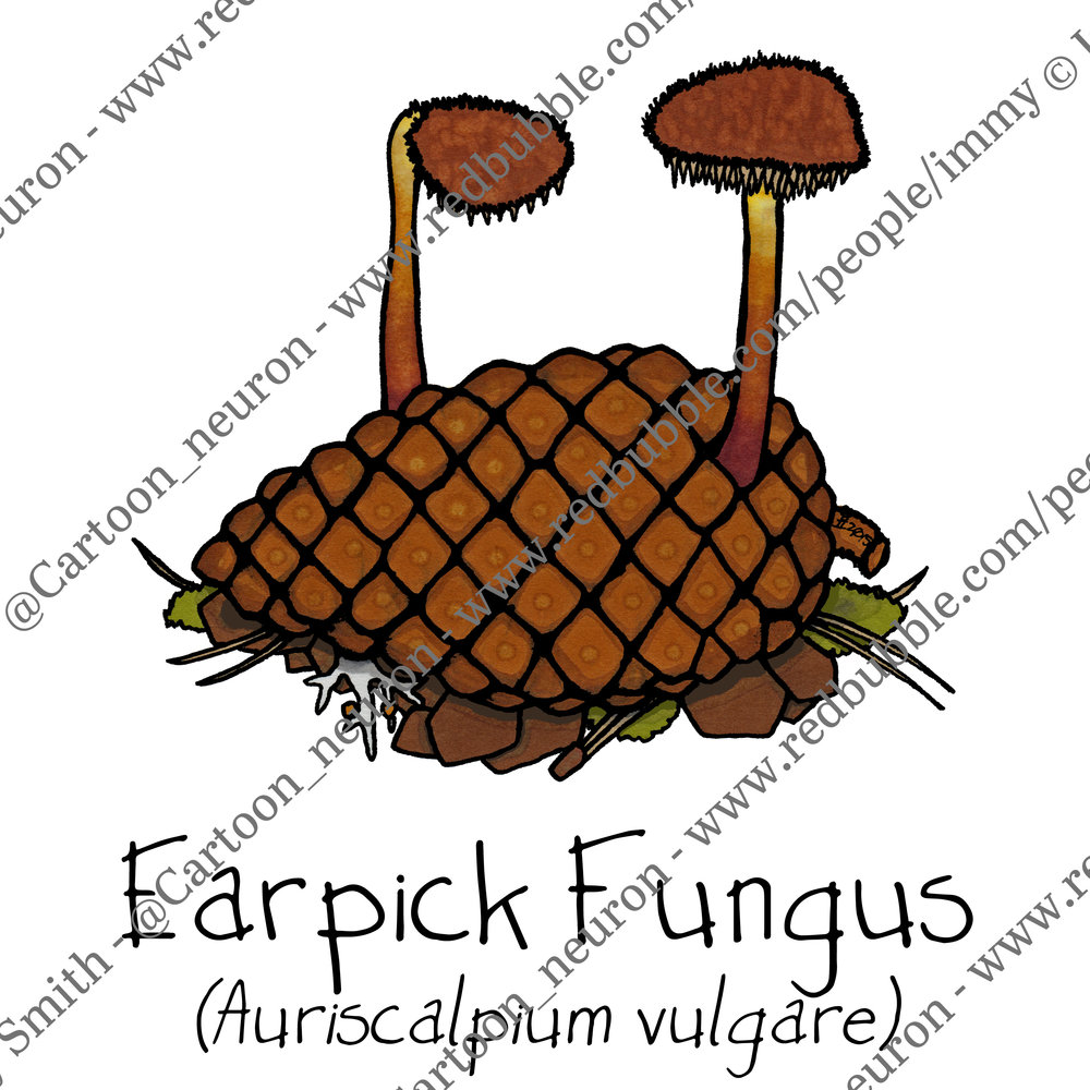 Fungi botanical cartoons for poster series