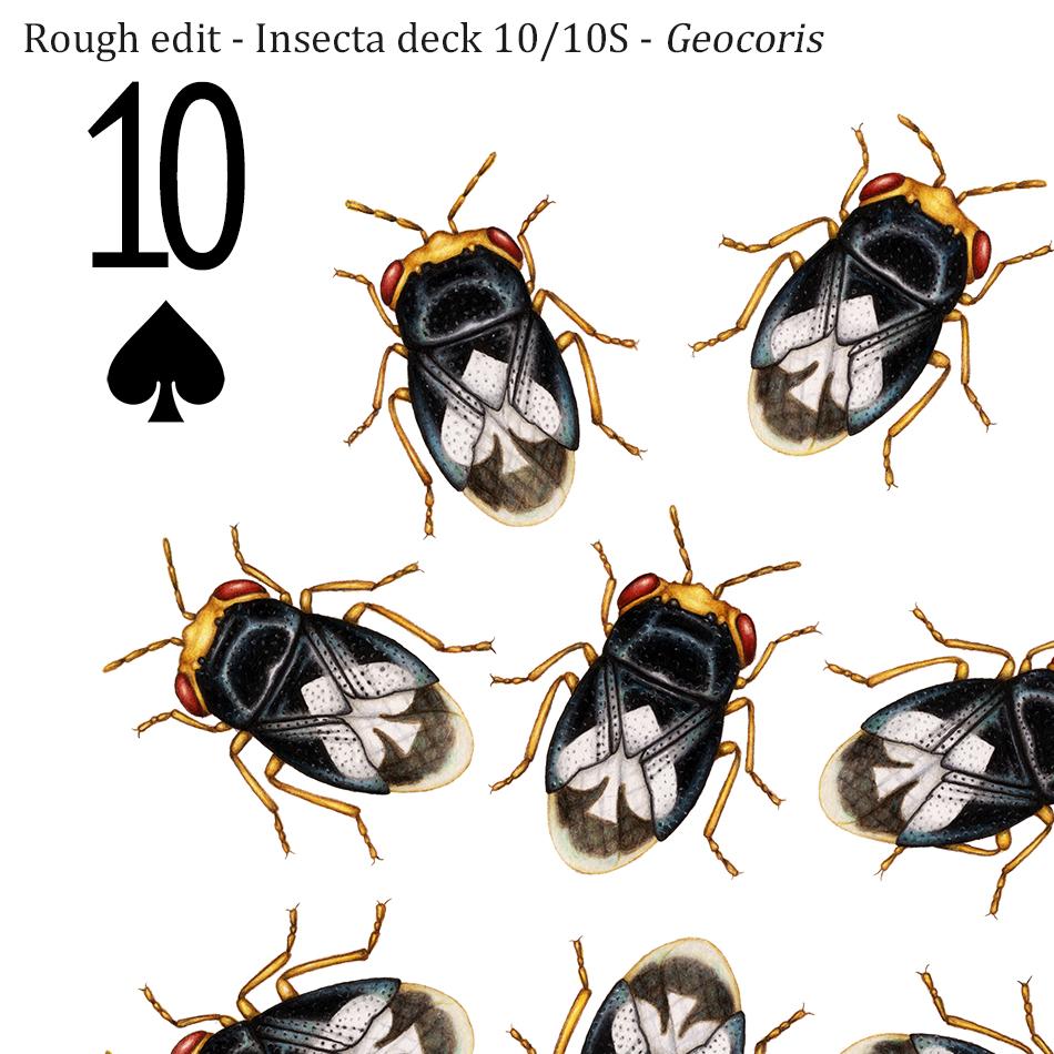 10_10S crop.jpg
