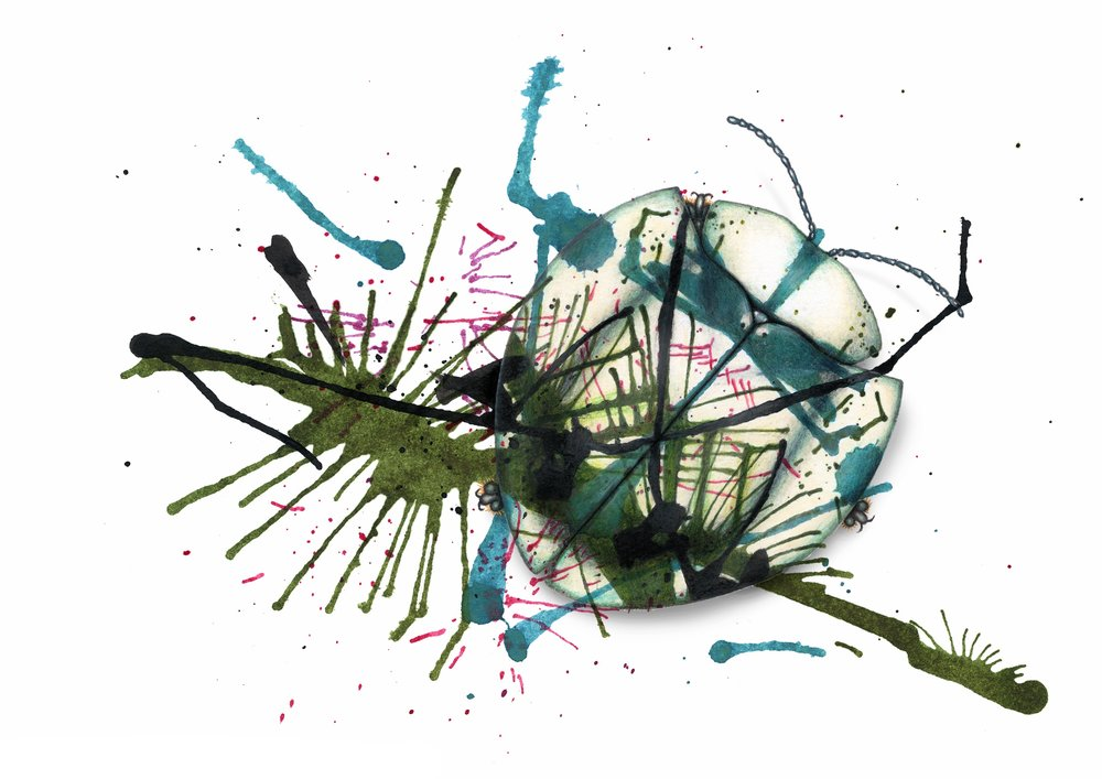 Experimental drawings for an array of evolving beetles