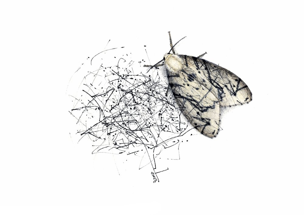 Experimental moth for an array of evolving insects