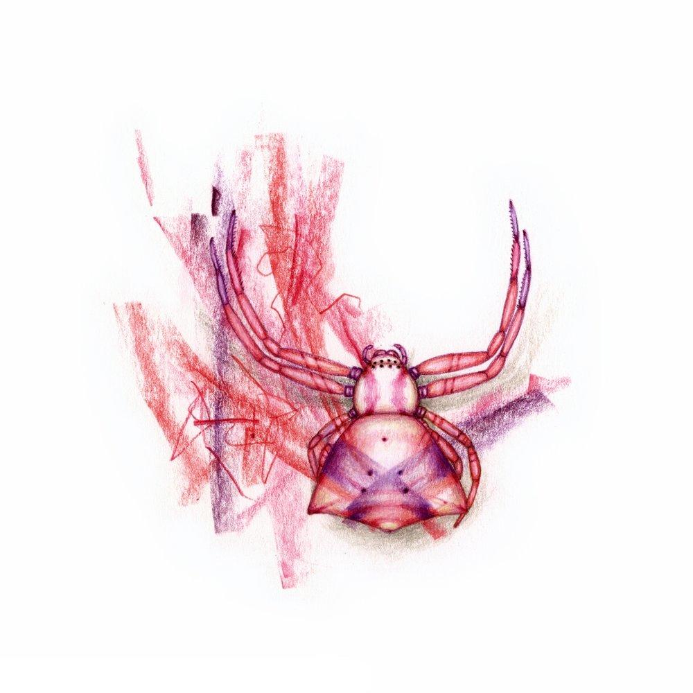pink spider 1.jpg
