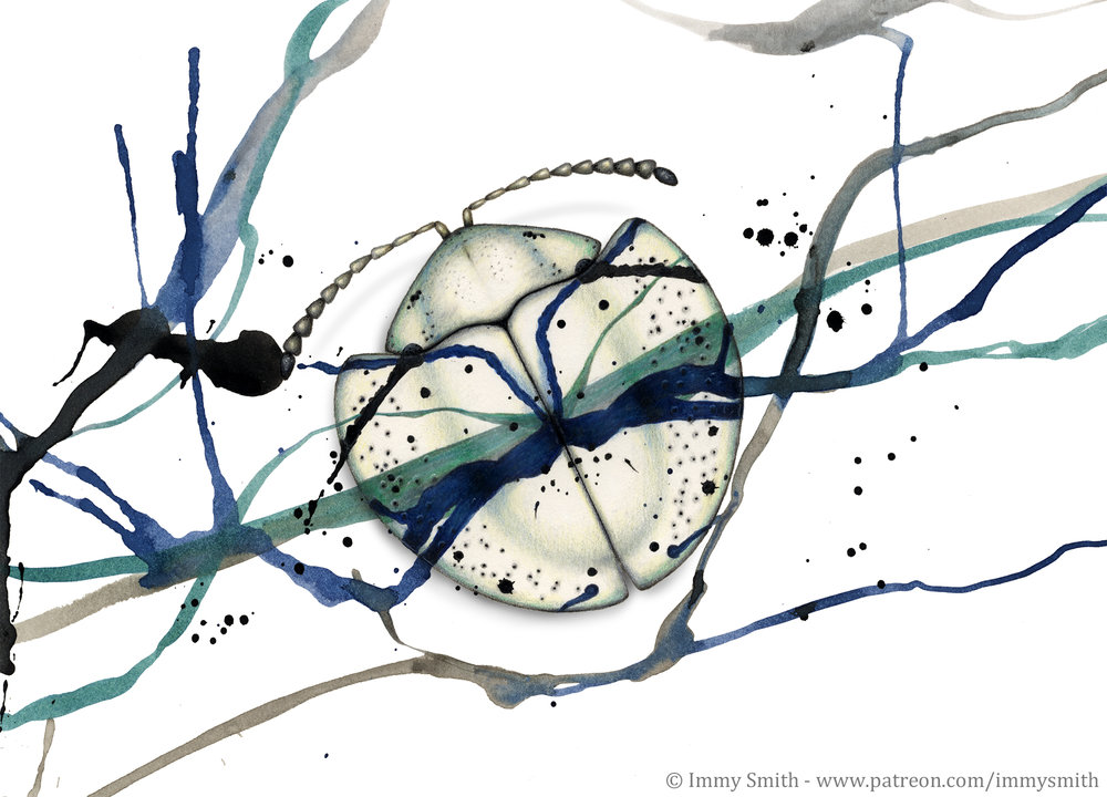Image description; a small tortoise beetle drawn in colour pencil over a page of abstract ink splatter. It's drawn in such a way that it appears camouflaged on the underlying pattern.