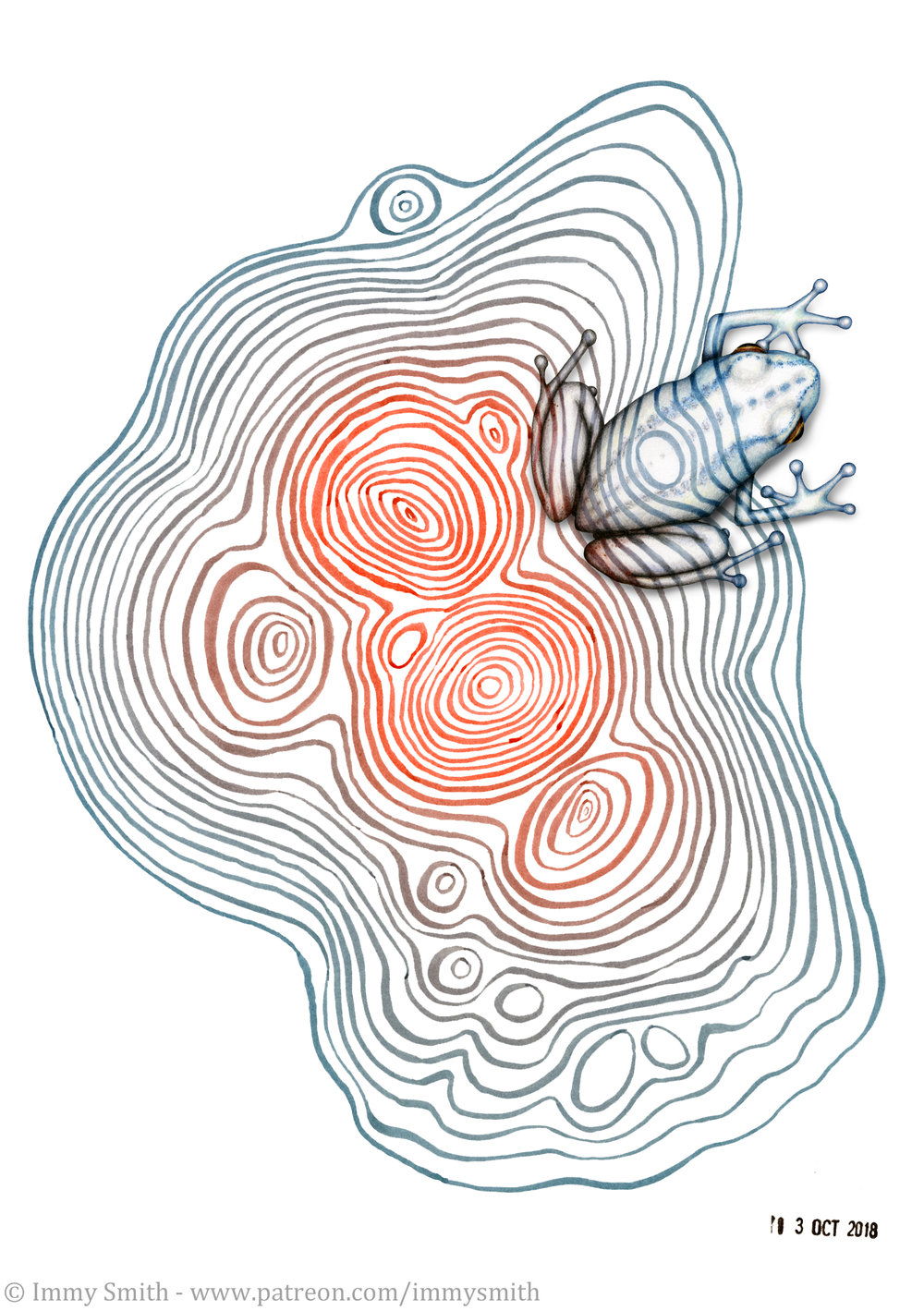 Image description; a small rainfrog drawn in colour pencil over an ink pattern made of concentric ovoid layers if ink lines. It's drawn in such a way that it appears camouflaged on the underlying pattern.