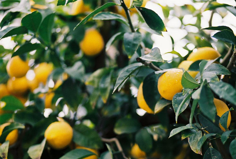 sacramentohybridfruit