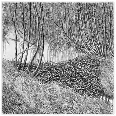 Beaverdam (2006)