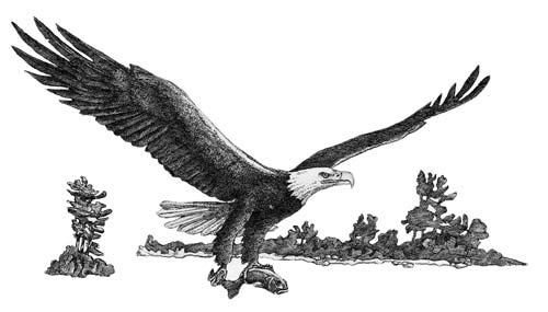 Eagle and Fish (2014)