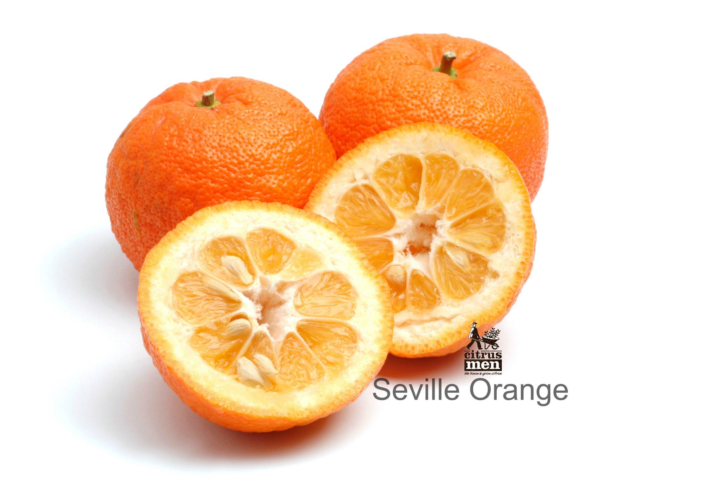 Berühmt Seville - Sour Orange — Citrus Men &FH_51