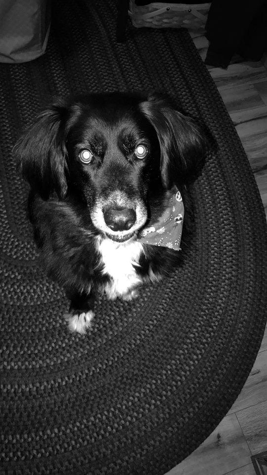 Riley 3.jpg
