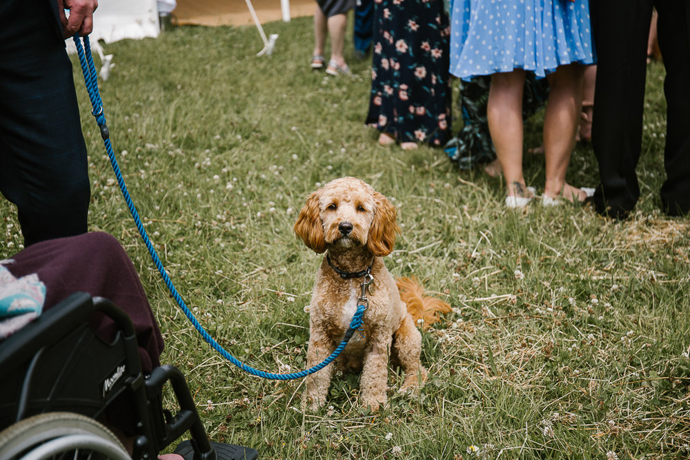dog at wedding in the cotswolds