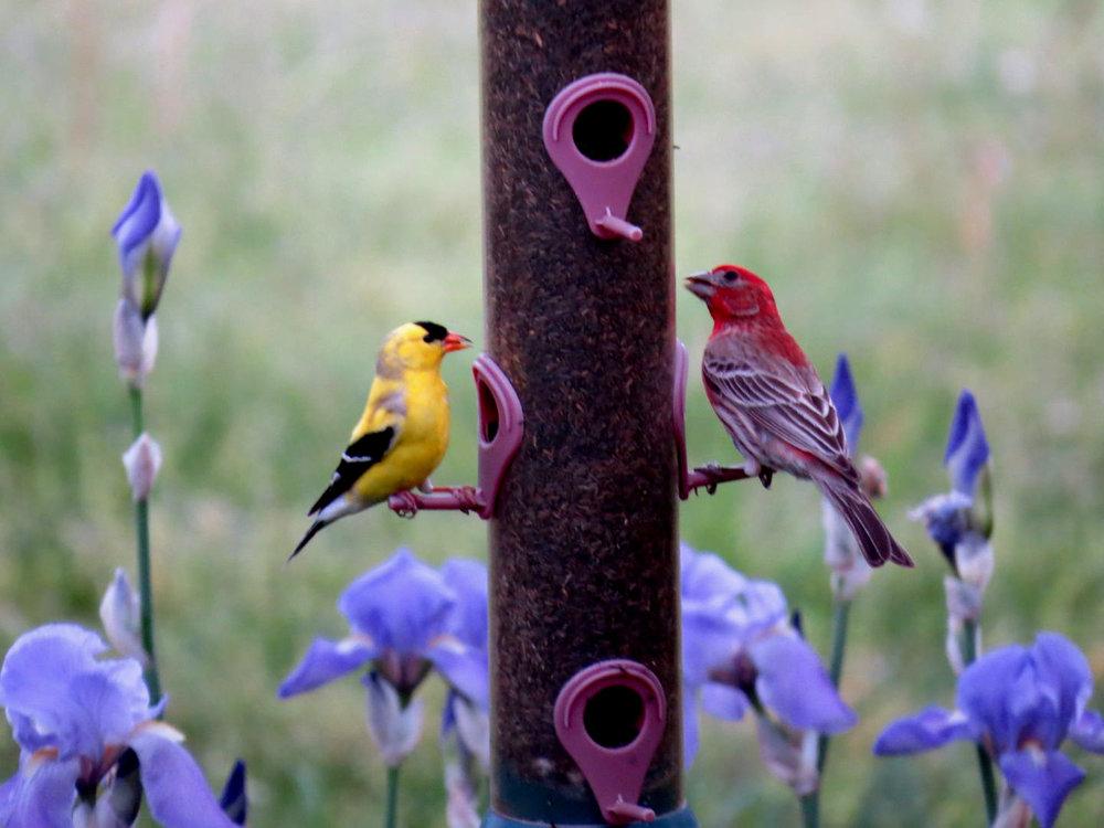 Birds at feeder.jpg