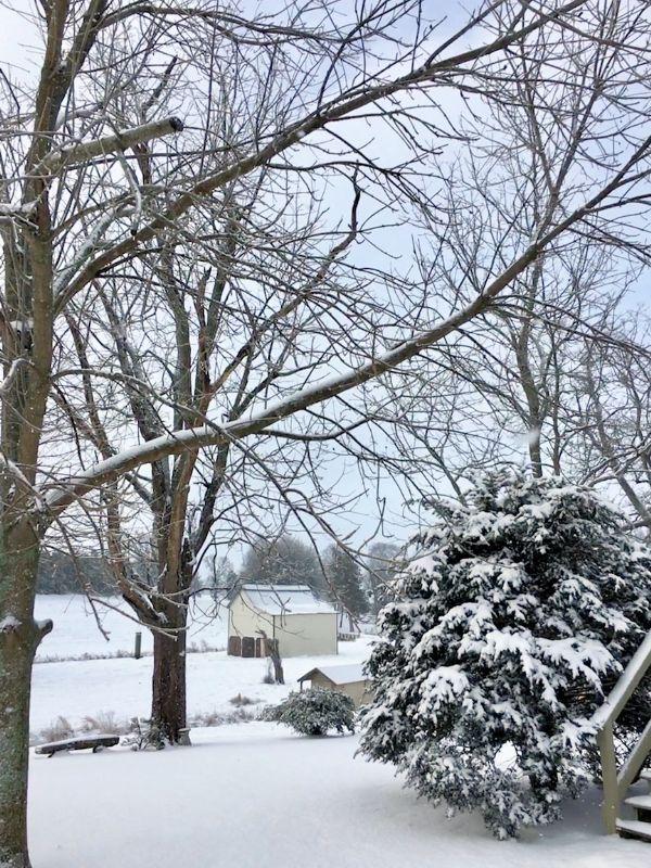 Winter on the farm.jpg