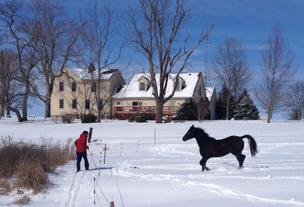 1.12.15 Romie w Tom in Snow.jpg