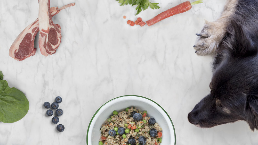 Dog food. Reimagined.