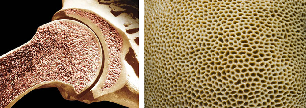 CORAL STRUCTURE