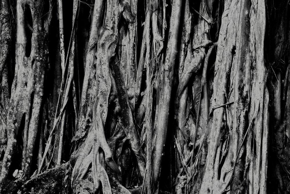 treeroots solarized copy (1).jpg
