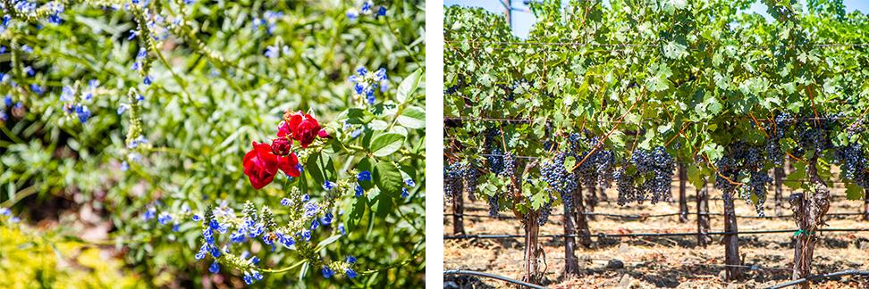 Napa Valley Olive Oil & Wine Tasting